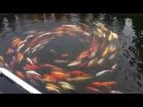 Плавание рыбок в кругу